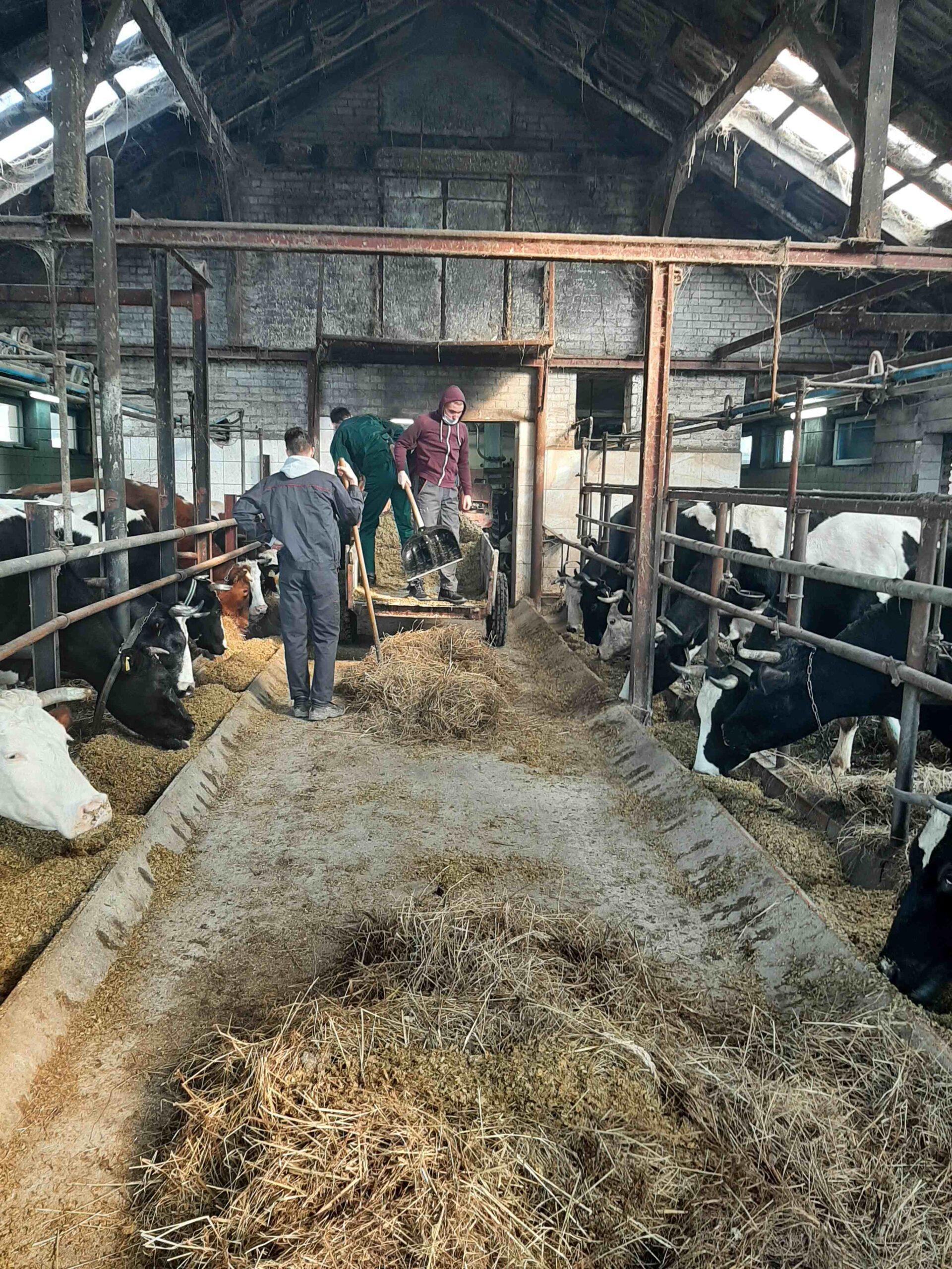 Tym razem zajęcia praktyczne w gospodarstwie rolnym w Starych Oleszycach